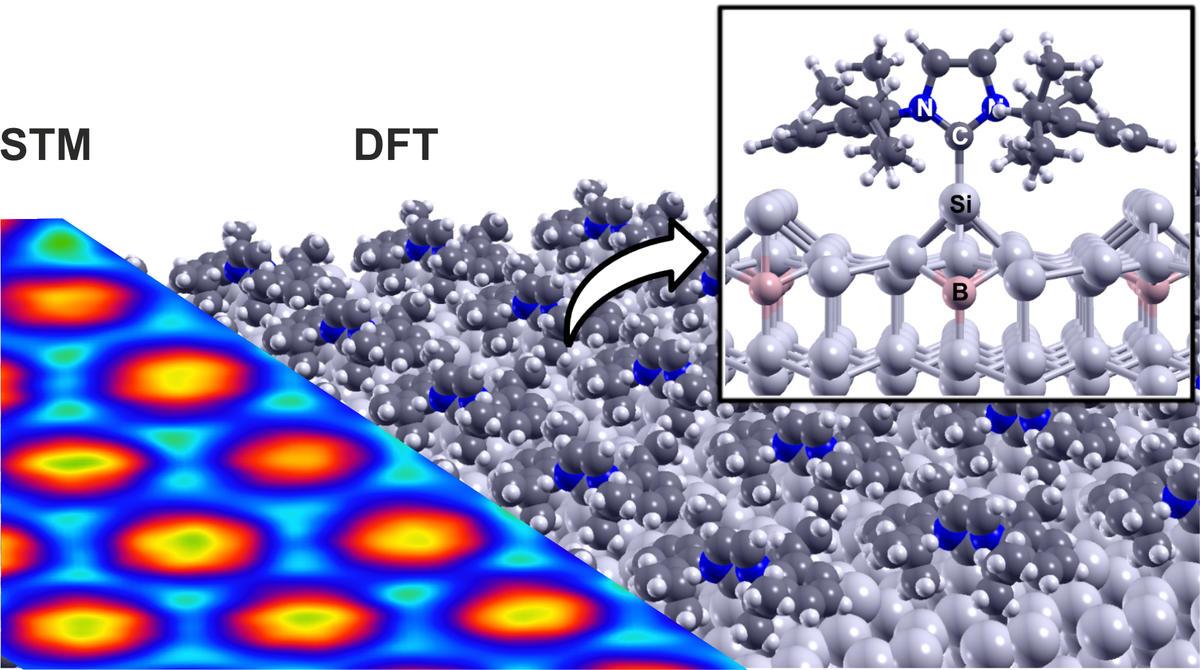 Vergleich der theoretisch berechneten Struktur (DFT, rechts) der geordneten NHC-Einzellage mit dem experimentellen Rastertunnelmikroskopie-Bild (STM, links). N: Stickstoff-, C: Kohlenstoff-, Si: Silizium-, B: Bor-Atom. © Dr. Hazem Aldahhak und Dr. Martin Franz.